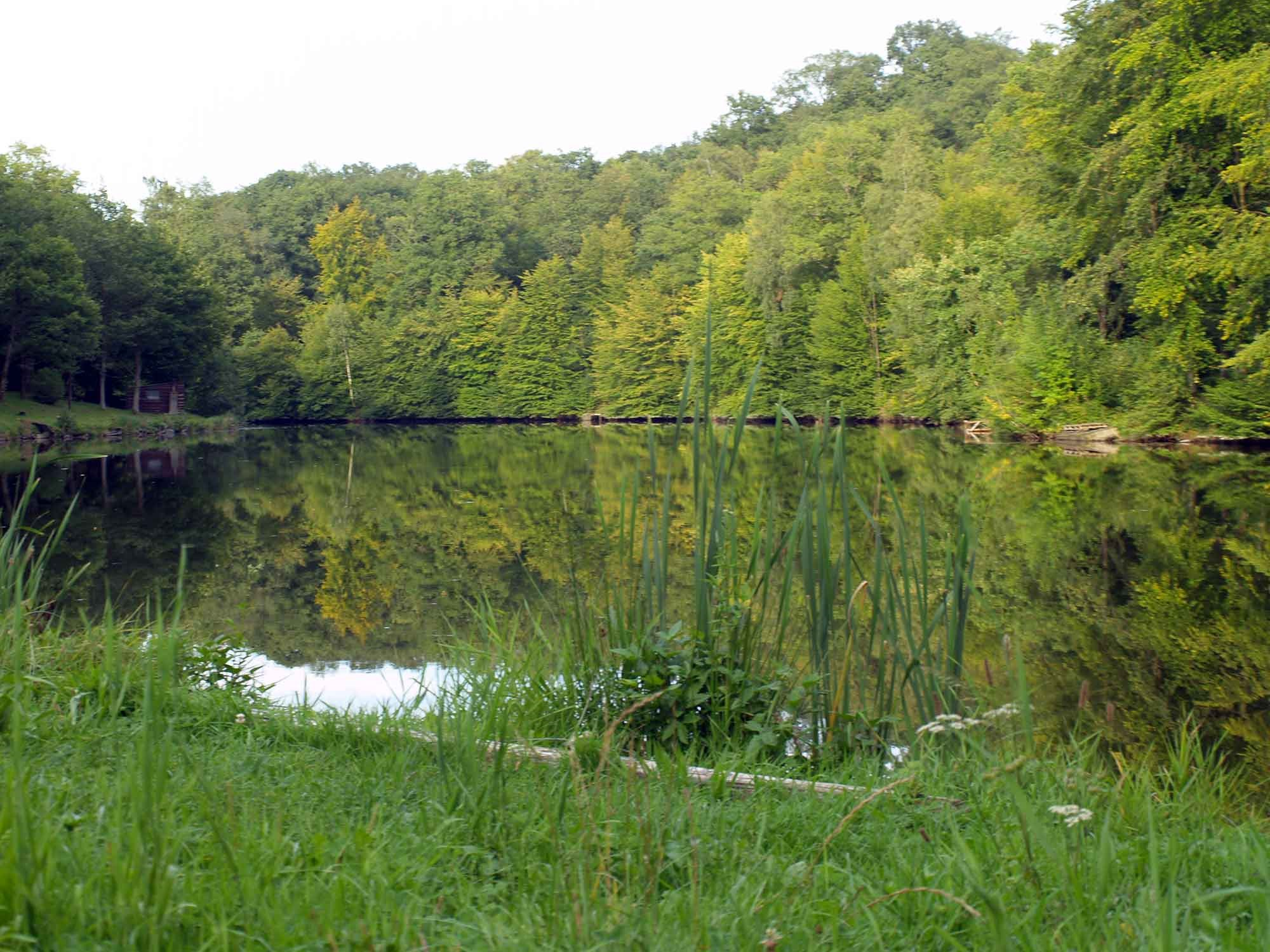 ardenne residences chimay 6460 region landscapes virgules lake