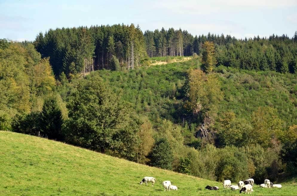 ardenne residences houffalize 6660 region landscapes achouffe woods