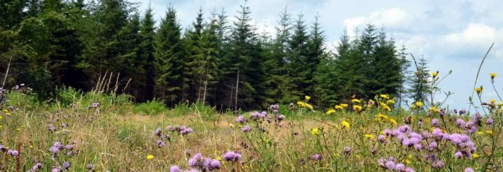 ardenne residences vielsalm 6690 region landscapes nature fields