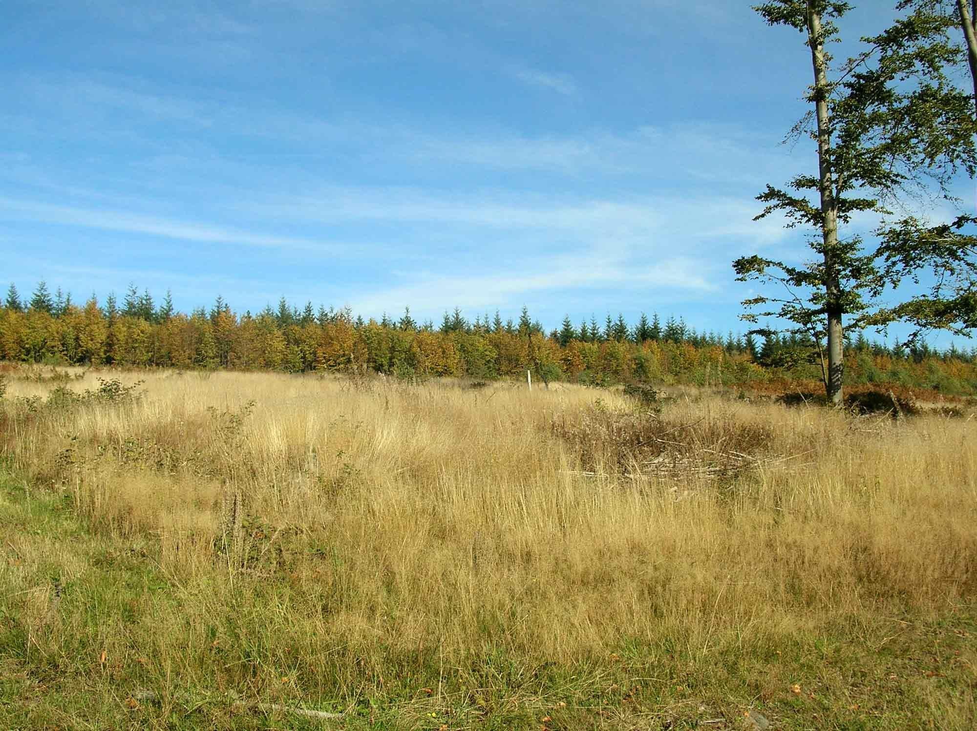 ardenne residences saint-hubert 6870 region landscapes fens summer