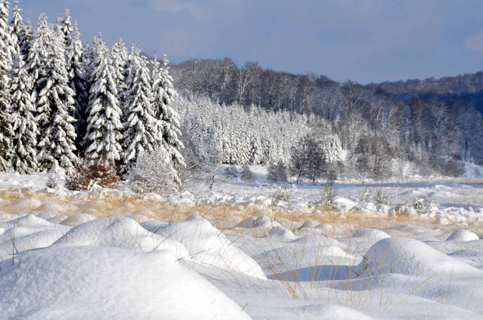 ardenne residences saint-hubert 6870 region landscapes fens winter