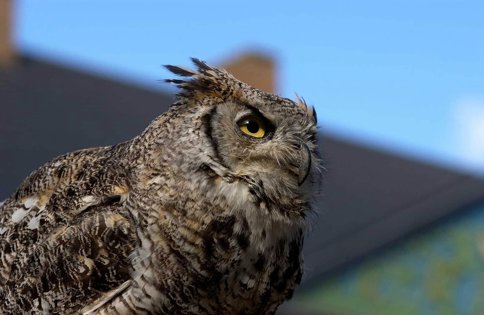 ardenne residences saint-hubert 6870 region landscapes owl