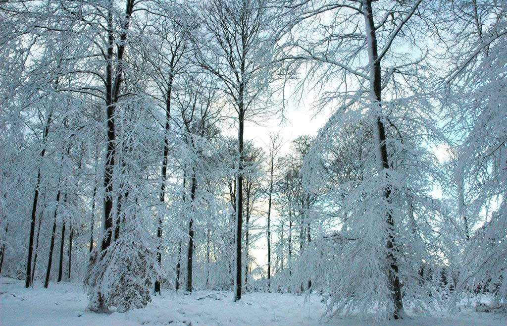 ardenne residences nassogne 6950 region landscapes winter forest