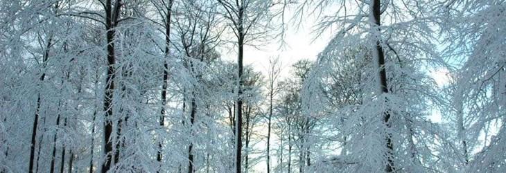 ardenne residences nassogne 6950 region landscapes winter forest