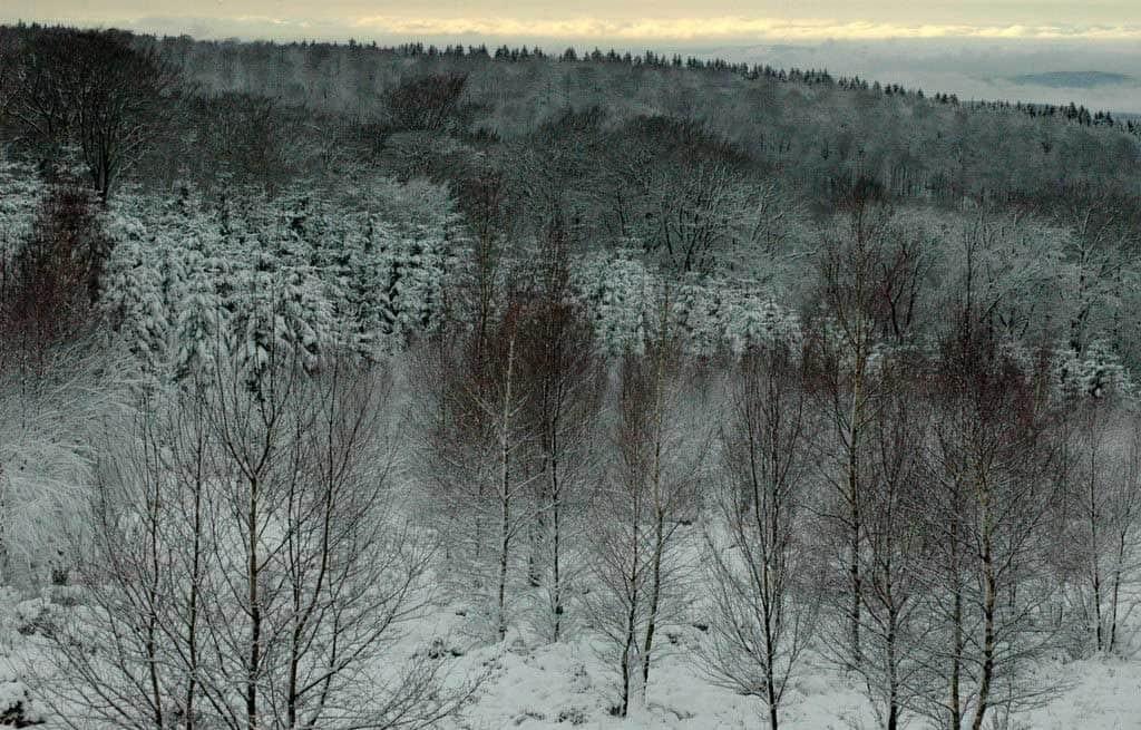 ardenne residences nassogne 6950 region landscapes woods