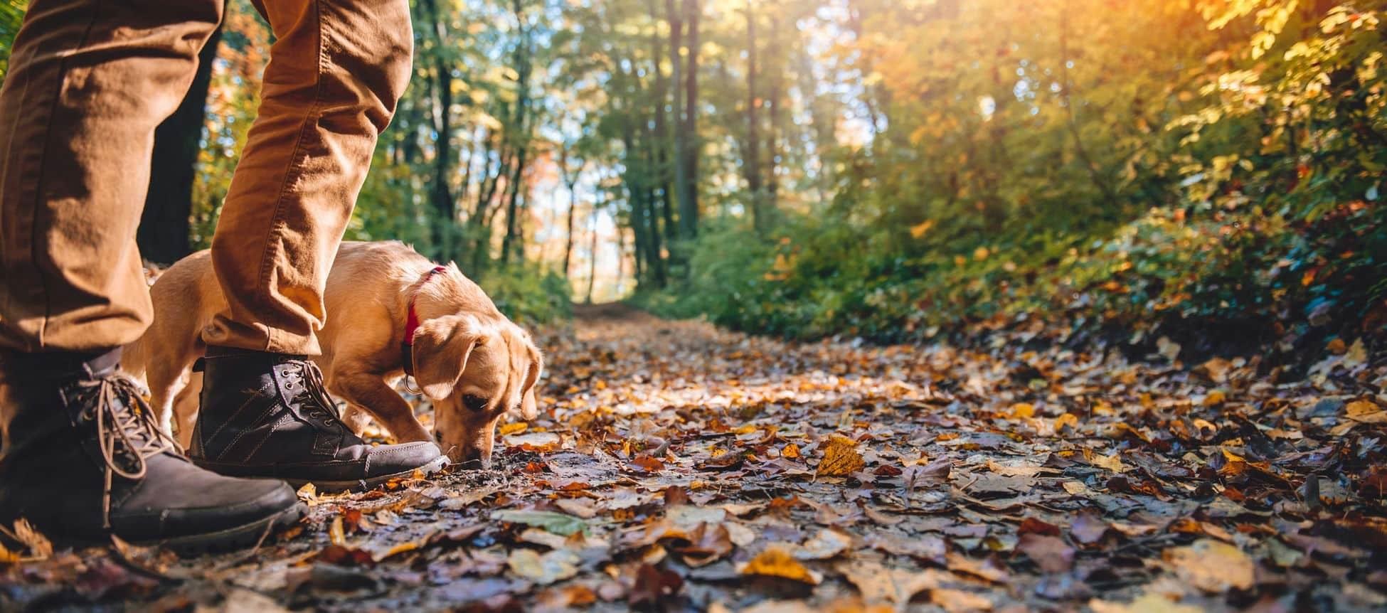 Naar de Ardennen reizen met hond: vakantiehuizen