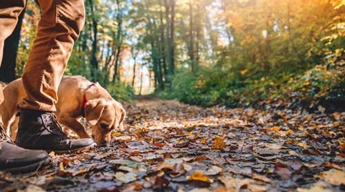 Voyager avec mon chien : Location de vacances chien accepté